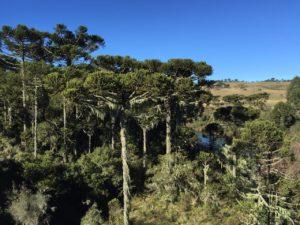 sao joaquim - Serra do Rio do Rastro (SC): descubra este destino incrível