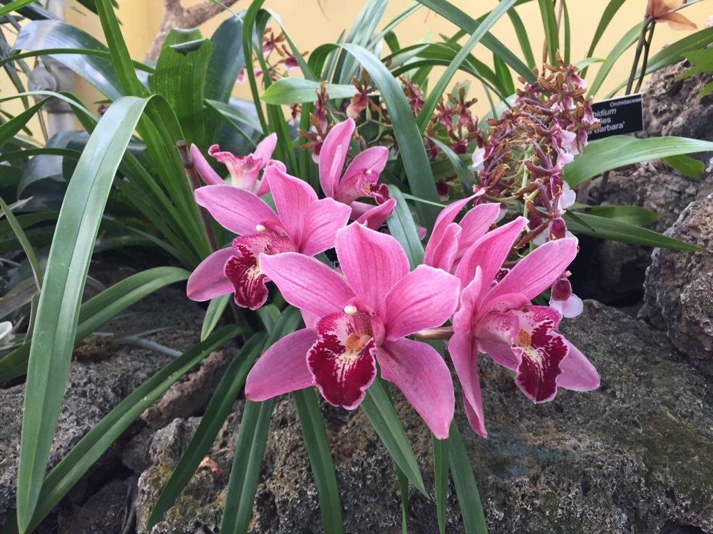 passeios em washington dc jardim botânico