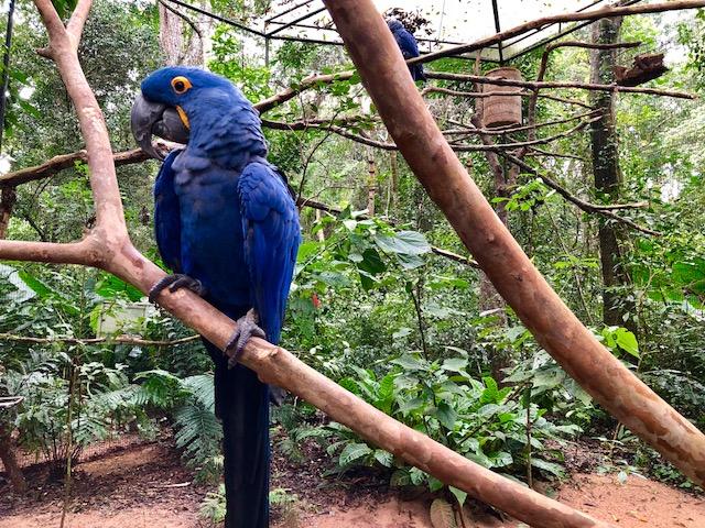 arara azul parque das aves
