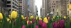 O que fazer em Chicago e arredores – nosso roteiro