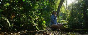Conheça Foz do Iguaçu: Passeios Imperdíveis de Ecoturismo na Cidade