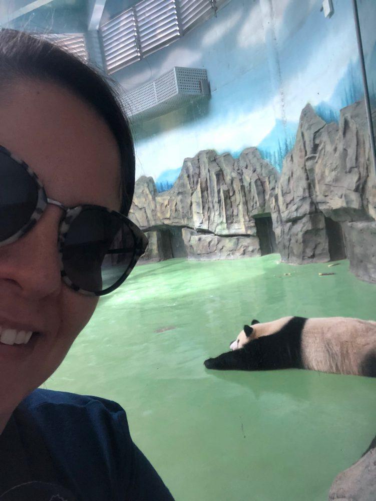 urso panda china