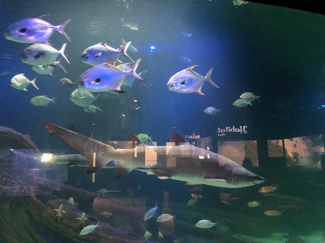aquário em Balneário Camboriú